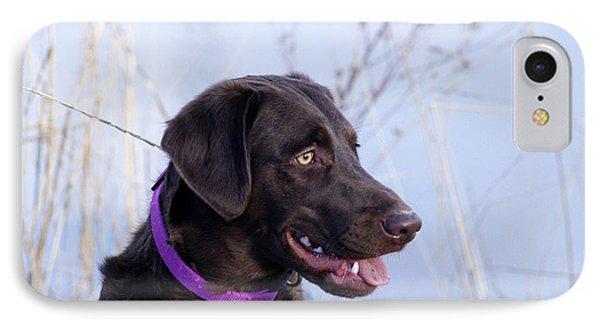 Chocolate Labrador Retriever IPhone Case by William H. Mullins