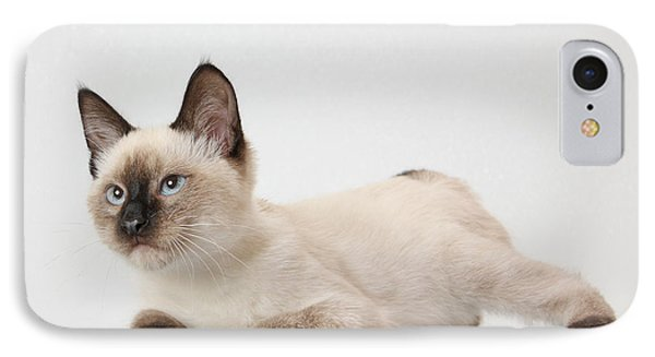 Chocolate Point Siamese IPhone Case