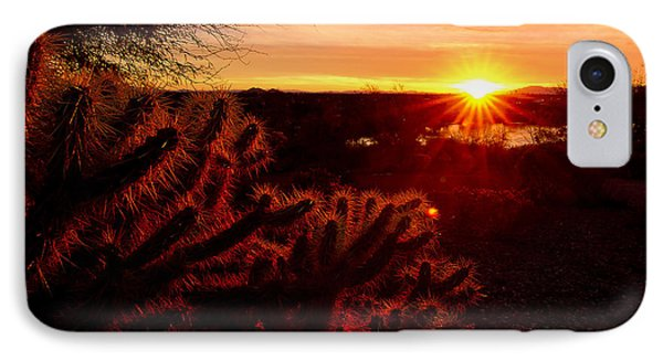 Cholla On Fire IPhone Case by Kelly Gibson