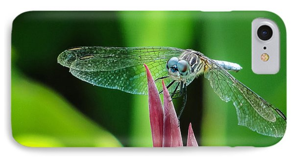 IPhone Case featuring the photograph Chomped Wing Squared by TK Goforth