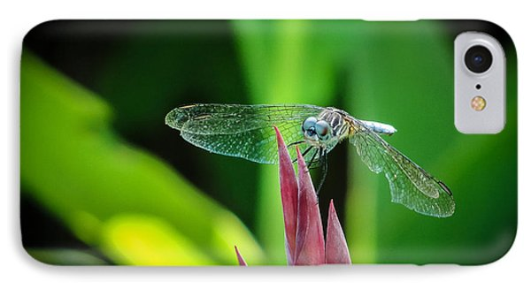 IPhone Case featuring the photograph Chomped Wing by TK Goforth