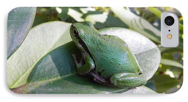 Chorus Frog On A Rhodo IPhone Case by Cheryl Hoyle