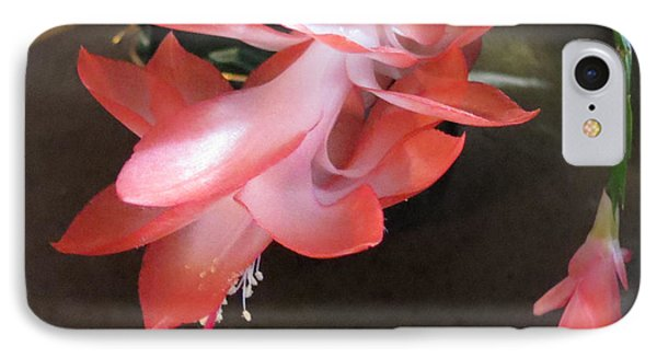 Christmas Cactus Bloom IPhone Case by Fortunate Findings Shirley Dickerson