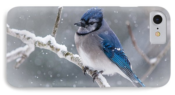 Christmas Card Bluejay IPhone Case by Cheryl Baxter