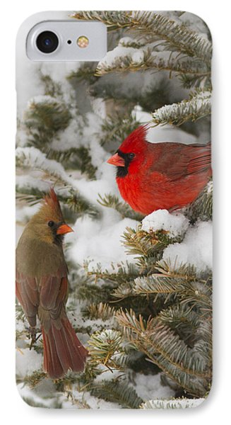 Christmas Card With Cardinals IPhone Case by Mircea Costina Photography