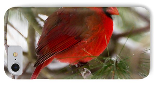IPhone Case featuring the photograph Christmas Cardinal by Kerri Farley