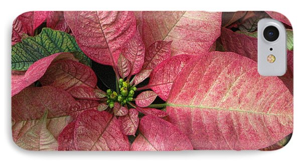 IPhone Case featuring the photograph Christmas Flower by Tammy Espino