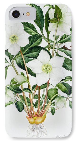 Christmas Rose IPhone Case by Sally Crosthwaite