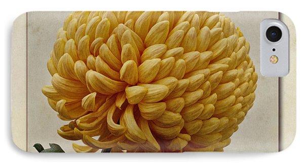 Chrysanthemum Grandiflorum Yellow Phone Case by John Edwards