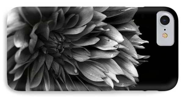 Chrysanthemum In Black And White IPhone Case by Eena Bo