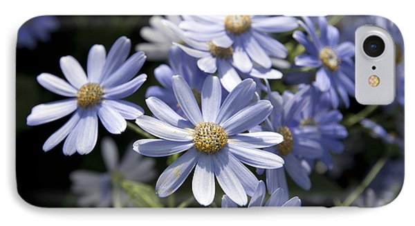 Cineraria 1225 Phone Case by Terri Winkler