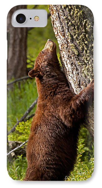 IPhone Case featuring the photograph Cinnamon Boar Black Bear by J L Woody Wooden