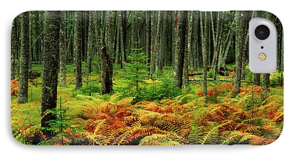 Cinnamon Ferns And Red Spruce Trees IPhone Case by Panoramic Images
