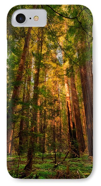 Circle Of Light - California Redwoods IPhone Case
