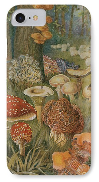 Citizens Of The Land Of Mushrooms Phone Case by Science Source