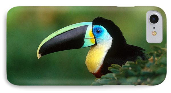 Citron-throated Toucan IPhone Case by Art Wolfe