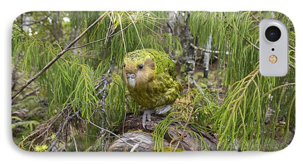 Ckakapo Male In Forest Codfish Island IPhone Case by Tui De Roy
