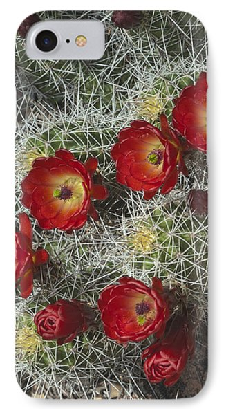 Claret Cactus - Vertical IPhone Case by Gregory Scott