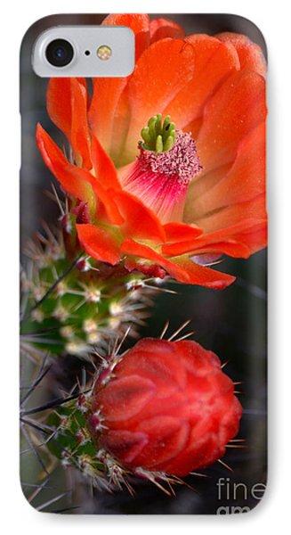 Claret Cup Cactus IPhone Case