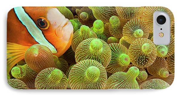 Clark S Anemonefish  Amphiprion Clarkii IPhone Case by Dave Fleetham