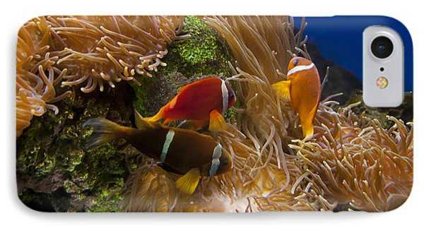 Clark's Anemonefish And A Tomato Clownfish   #5196 IPhone Case by J L Woody Wooden