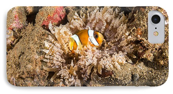 Clarks Anemonefish IPhone Case by Andrew J. Martinez