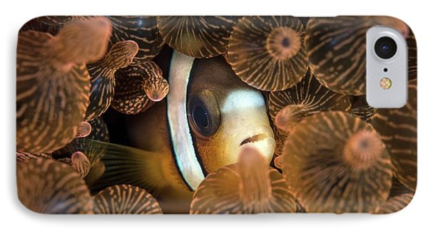 Clark's Anemonefish IPhone Case by Ethan Daniels