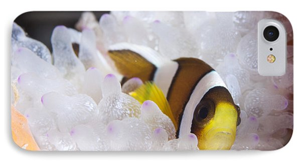 Clarks Anemonefish In White Anemone Phone Case by Steve Jones