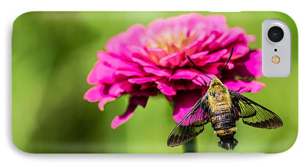 Clearwing Moth IPhone Case by Debbie Green
