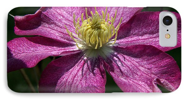 Clematis Aglow IPhone Case by Michael Friedman