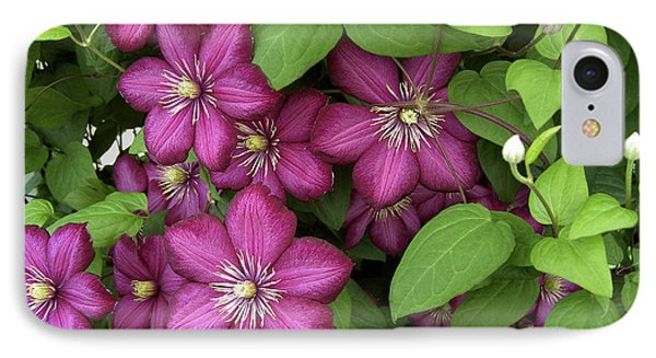 Clematis IPhone Case by Penny Lisowski