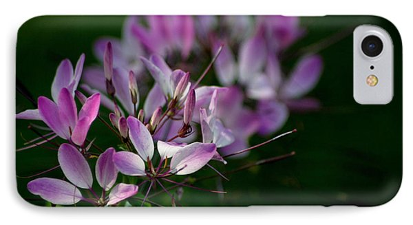 Cleome IPhone Case by Living Color Photography Lorraine Lynch