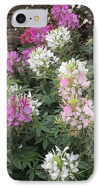 IPhone Case featuring the photograph Cleome - Spider Flower by Jayne Wilson