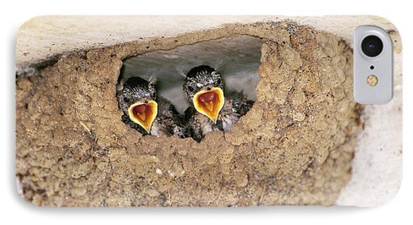 Cliff Swallow Chicks IPhone Case by Paul J. Fusco