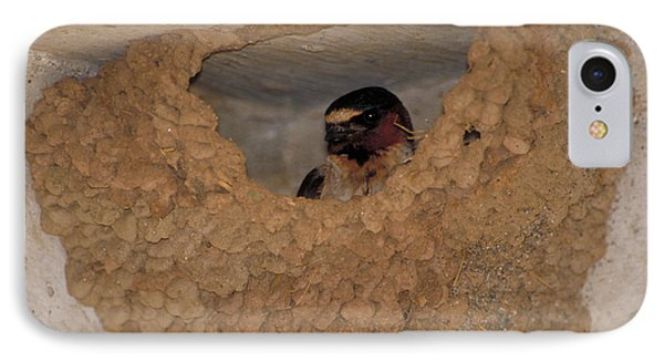 Cliff Swallows IPhone 7 Case by Paul J. Fusco