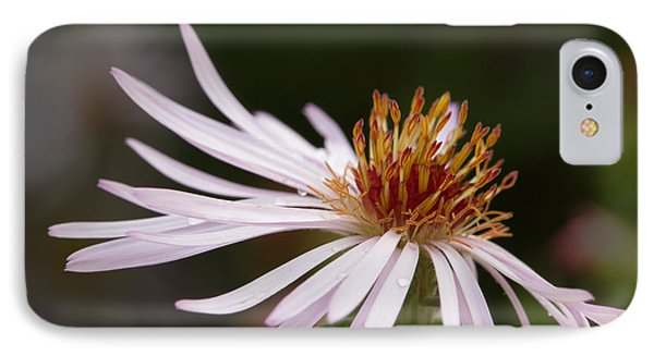 IPhone Case featuring the photograph Climbing Aster by Paul Rebmann