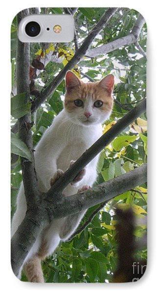 Climbing Kitty IPhone Case by Wendy Coulson