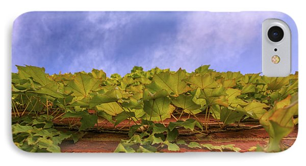 Climbing The Walls - Ivy - Vines - Brick Wall Phone Case by Jason Politte