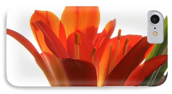 IPhone Case featuring the photograph Clivia by Jivko Nakev