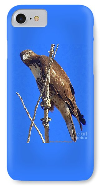 Hawk Close Up  IPhone Case by Bobbee Rickard
