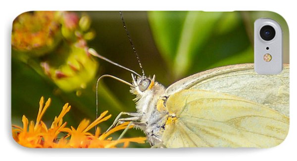Butterfly Attracted To Mexican Flame IPhone Case by Debra Martz