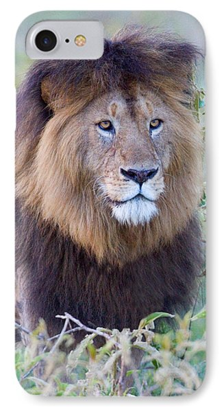 Close-up Of A Black Maned Lion IPhone Case by Panoramic Images