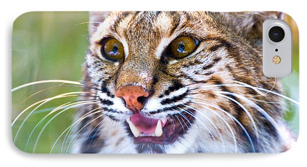 Close-up Of A Bobcat Lynx Rufus IPhone Case
