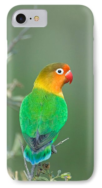 Lovebird iPhone 7 Case - Close-up Of A Fischers Lovebird by Panoramic Images