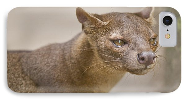 Close-up Of A Fossa Cryptoprocta Ferox IPhone Case by Panoramic Images