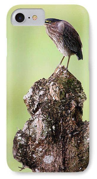 Close-up Of A Green Heron Butorides IPhone Case by Panoramic Images