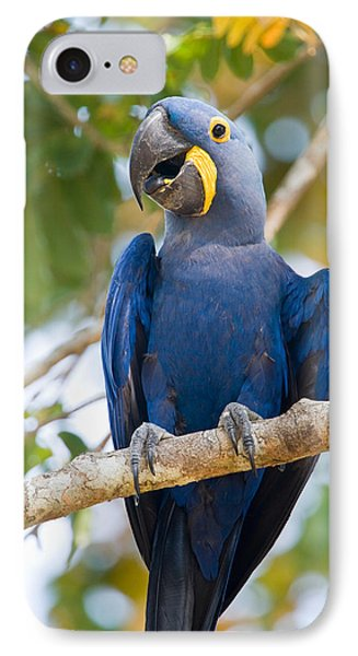 Close-up Of A Hyacinth Macaw IPhone Case by Panoramic Images