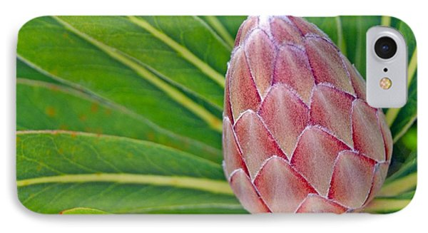Close Up Of A Protea In Bud IPhone Case