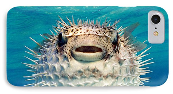 Close-up Of A Puffer Fish, Bahamas IPhone Case