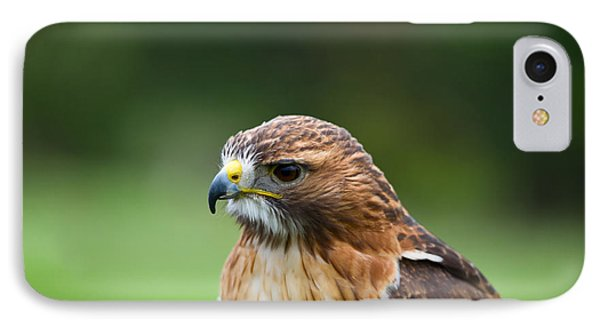 Close-up Of A Red-tailed Hawk Buteo IPhone Case by Panoramic Images